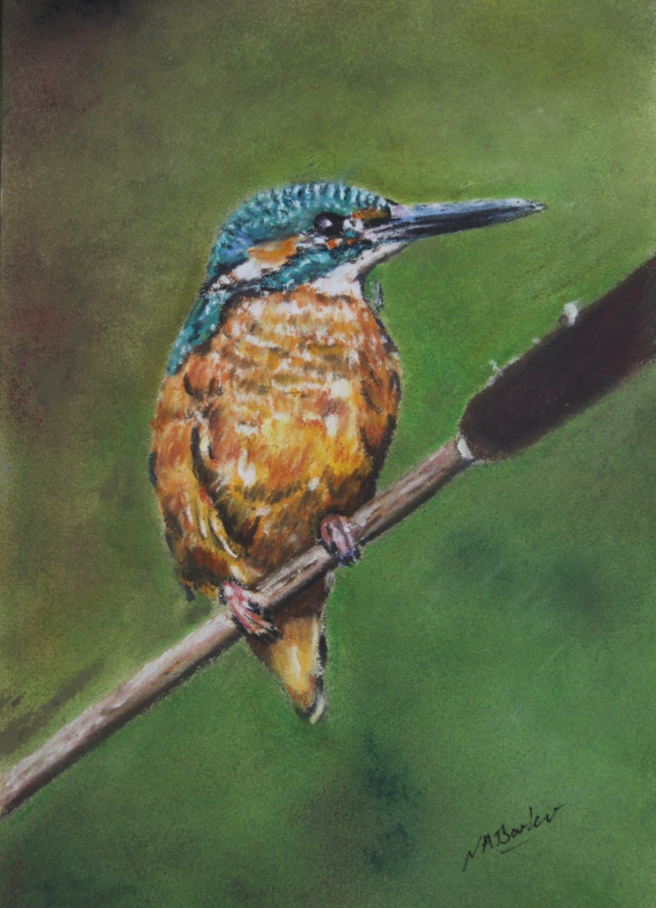 "British Kingfisher - Pastel - Framed Original - £225 - Size 10""x12"""