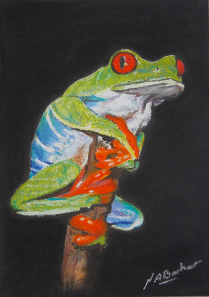"Red Eyed Tree Frog - Pastel - Framed Original - £225 - Size 10""x12"""
