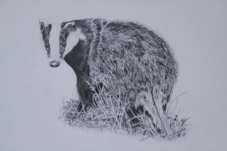 Badger - Graphite - Framed Original - £300