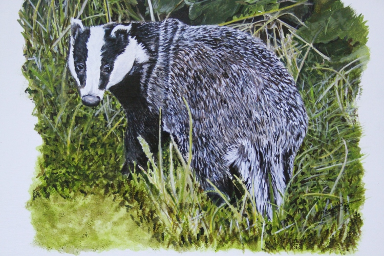 "Badger - Acrylic Ink - Framed Original - £400 - size 20""x18"""