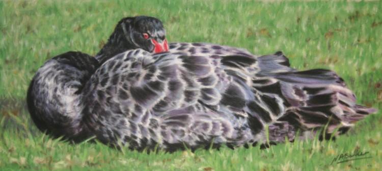 Black Swan - Pastel- £sold