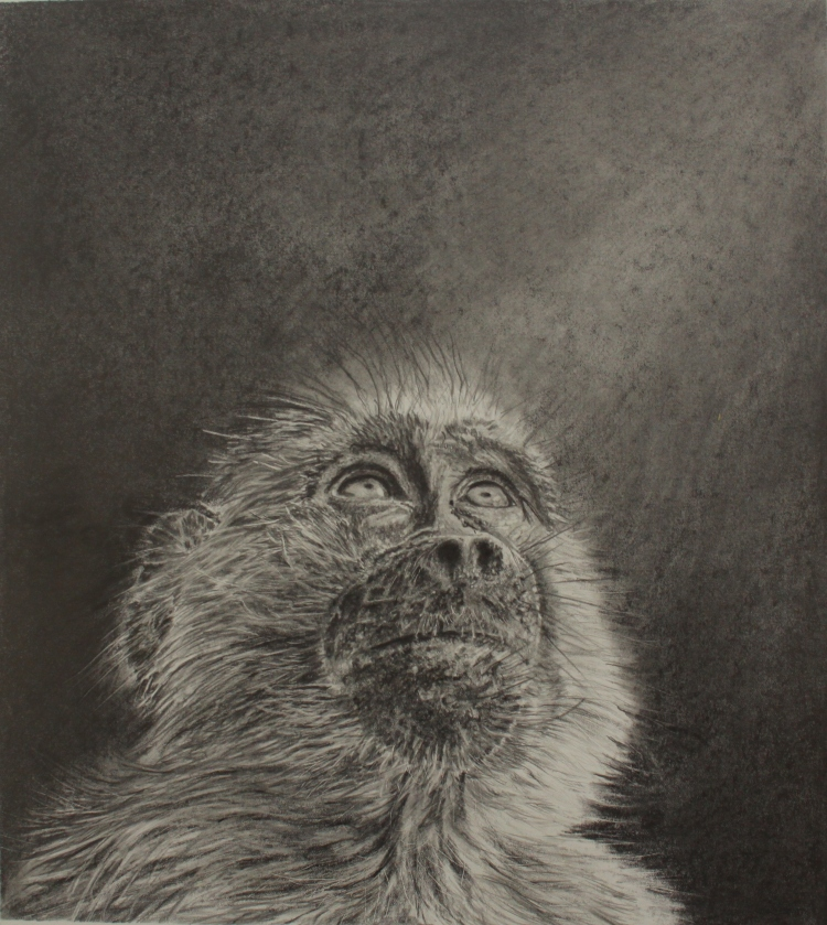 Star Gazer - Graphite - Framed Original - £175