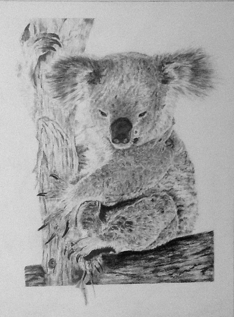 Koala - Graphite Pencil - Framed Original - £175