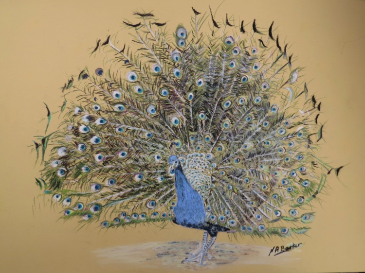 Peacock - Pastel - Framed Original - £300