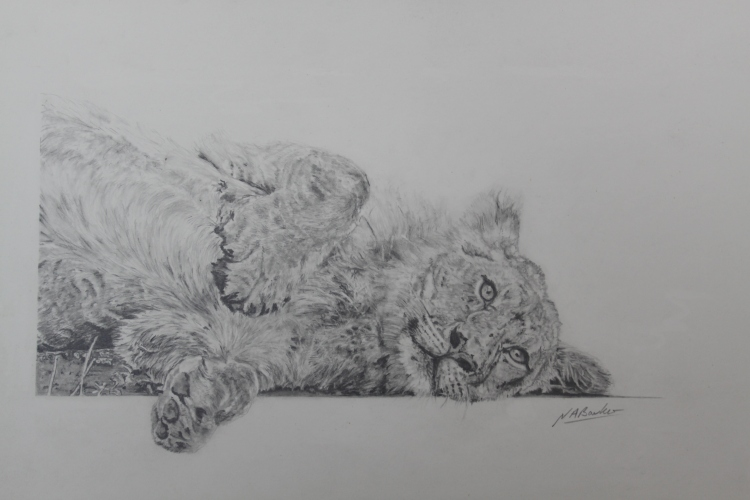 Paws for thought - Graphite Pencil - Framed Original - £200