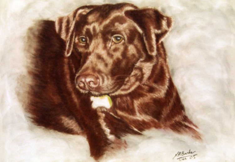 Commission - Chocolate Brown Labrador