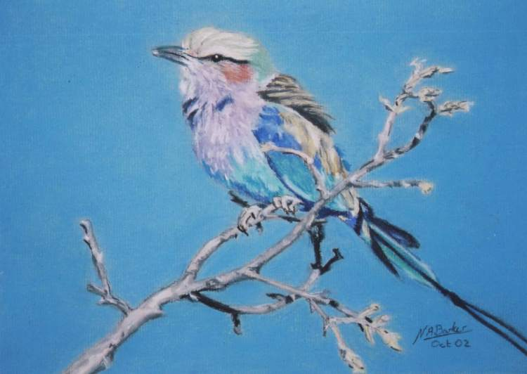 Lilac Breasted Roller - Pastel - £Sold
