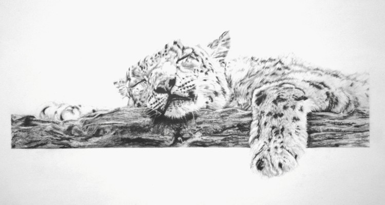 Sleeping Beauty - Graphite Pencil - £Sold