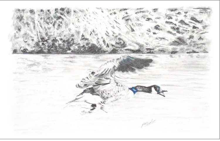 Goose in Graphite - Framed Original - £125