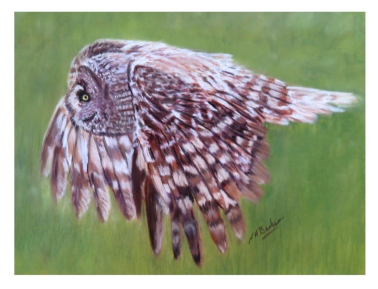 Grey Owl in Pastel - Framed Original - £175