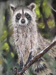 Racoon in Pastel - Framed Original - £300