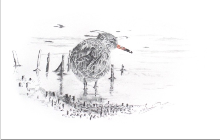 Red Shank in Graphite - Framed Original -£125