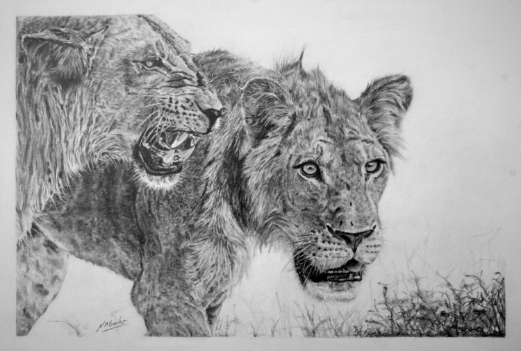 Beauty with in the Beast - Graphite - 63x50cn - Framed Original - £400
