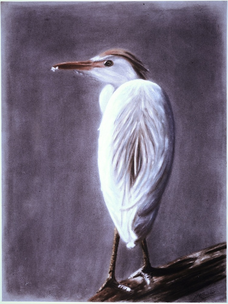 Cattle Egret - Pastel - Sold
