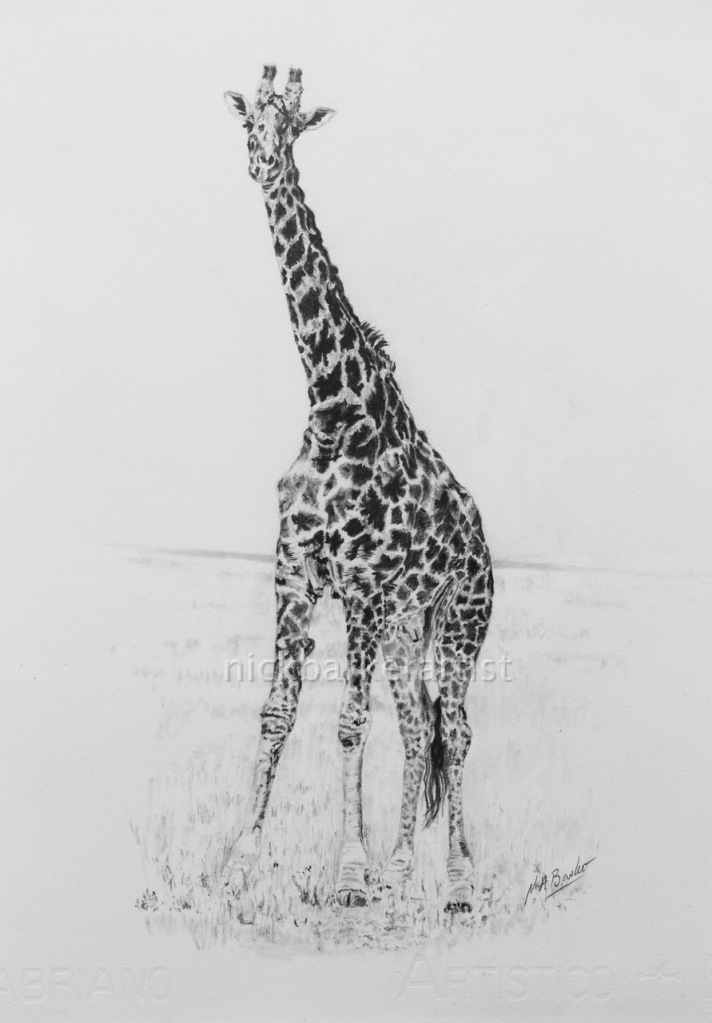 One Giraffe - Graphite - Unframed Original - £250