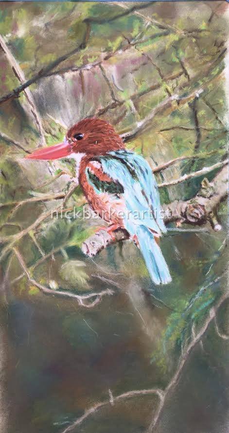 White Throated Kingfisher - Pastel - Unframed - £250