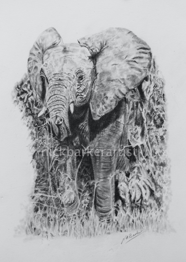 Young Ellie - Graphite - Unframed - £250