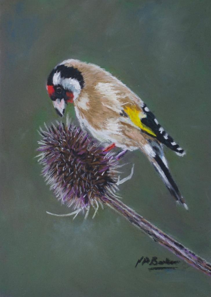 Goldfinch - Pastel on Ampersand Board - 18x12.5cm unframed - £150