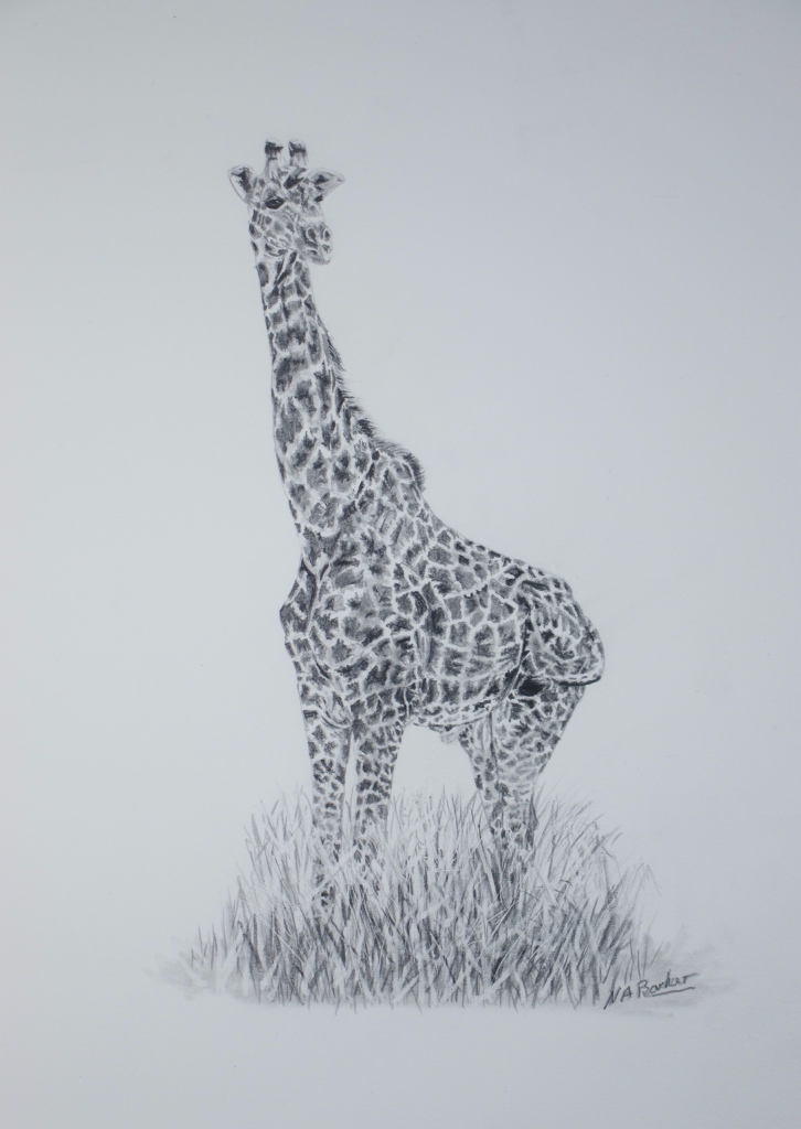 In the Long Grass - Graphite - 33x23cm unframed - £225